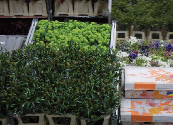 At the Aalsmeer auction house, 12.5 billion flowers and plants of 20,000 different varieties are handled yearly.