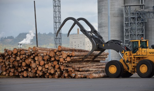 US forests reach new heights with wood exports | AJOT COM