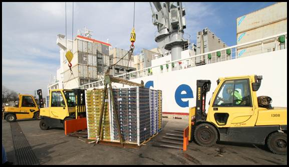 Chilean fruit ship discharge operations at the Port of Wilmington, Delaware