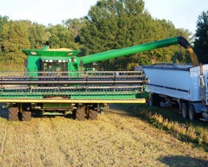 American soybean farmers look for new markets and fresh ways to ship