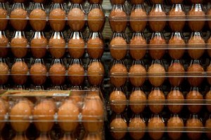 Egg cartons on backorder as packaging woes roil supply chain