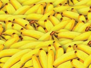 Banana business facing crisis of pandemic proportions