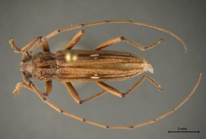 CBP agriculture specialists in Pharr intercept rare pest, a first in the Nation discovery