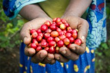 Africa's Top Coffee Exporter May Miss Season Shipment Target