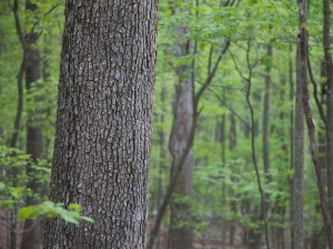 Tariffs - a knotty problem for forest products industry