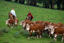 Beef only for Argentines, government says after halting exports