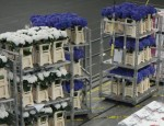 Royal Flora Holland – temperature-control logistics on a royal scale