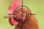 US chicken farmers latest caught in Russia sanction crosshairs