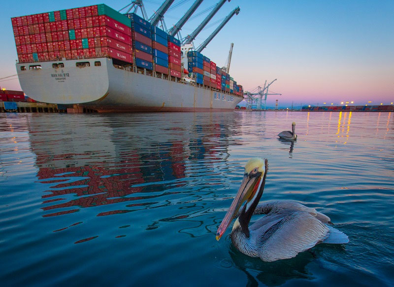 Pelicans At The Port Of Long Beach Where Sel Particulate Matter Emissions Are Down A