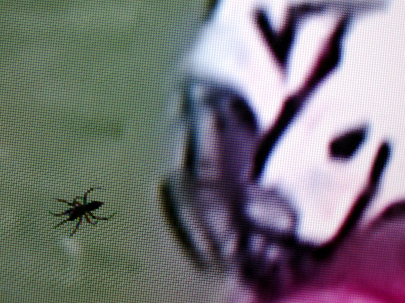 An arachnid trapped inside the screen of an imported TV appears to provide a distraction to a Virginia Tech football player. (Photo by Paul Scott Abbott, AJOT)